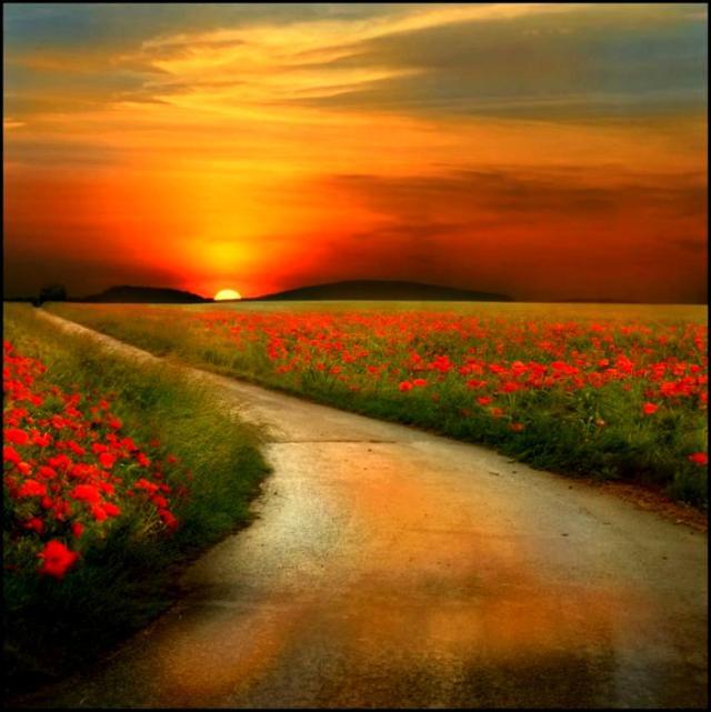 caminho-flores